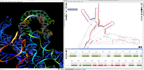 STRUCTURE_OF_A_BACTERIAL_RIBONUCLEASE_P_HOLOENZYME_IN_COMPLEX_WITH_et_UCSF_Chimera